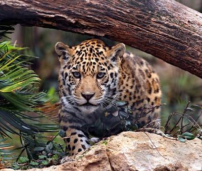 Heredia, Jaguar - Immobilienangebote zum Kauf oder zur Miete
